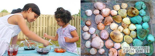 sea shell dying from The Educator's Spin On It