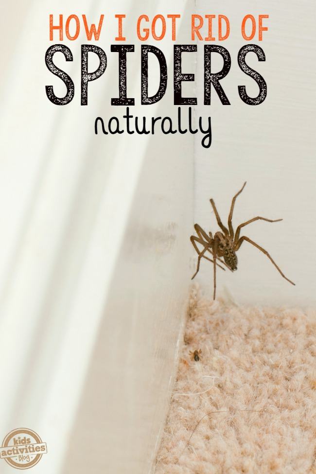 How to keep spiders away from your house for Home remedies to keep spiders away