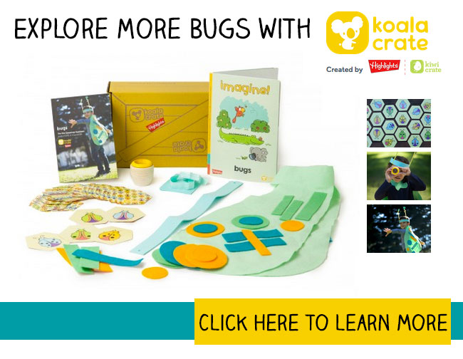 Explore More Bugs with Koala Crate