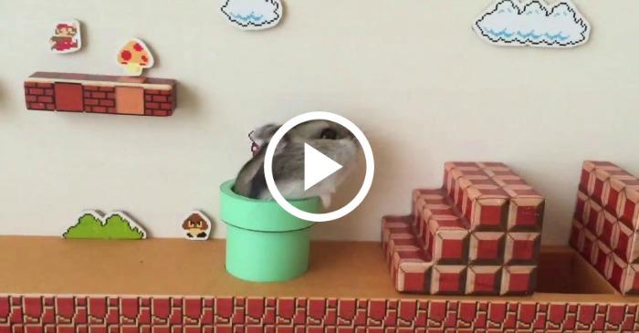hamster mario funny