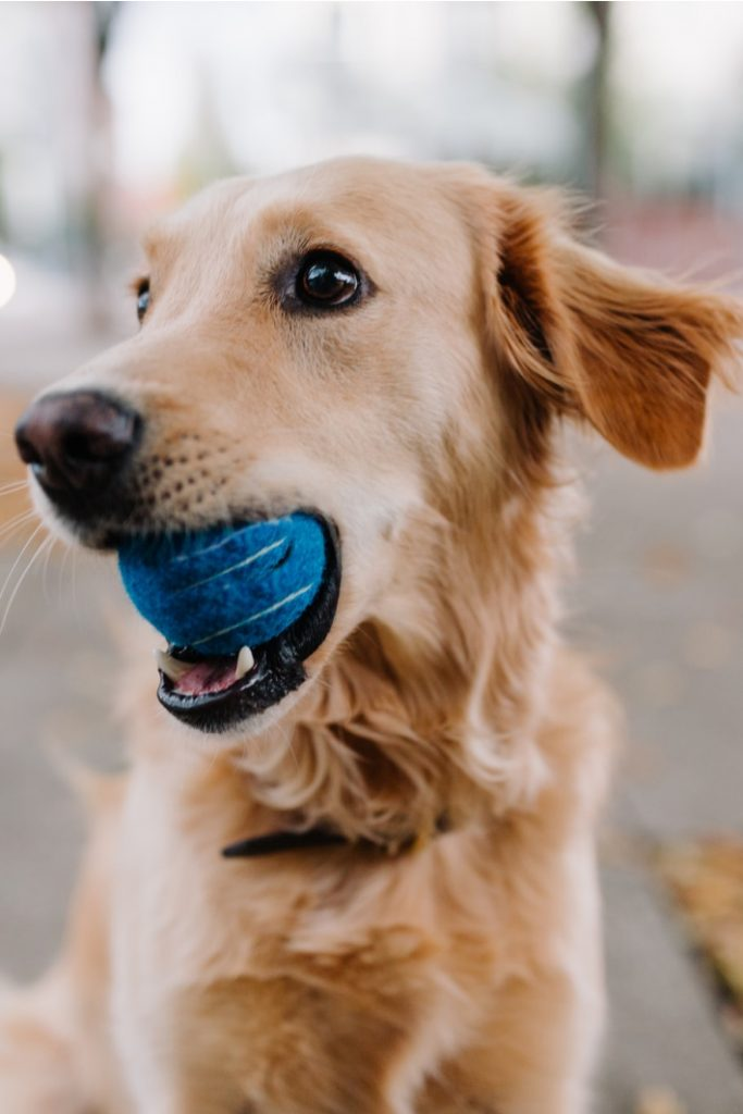 Why dogs and toddlers are the same thing video - Kids Activities Blog