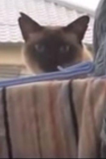 funniest cat video ever