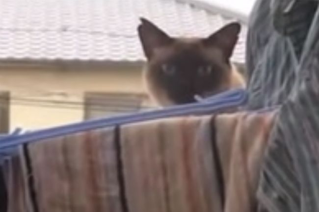 funniest cat video ever