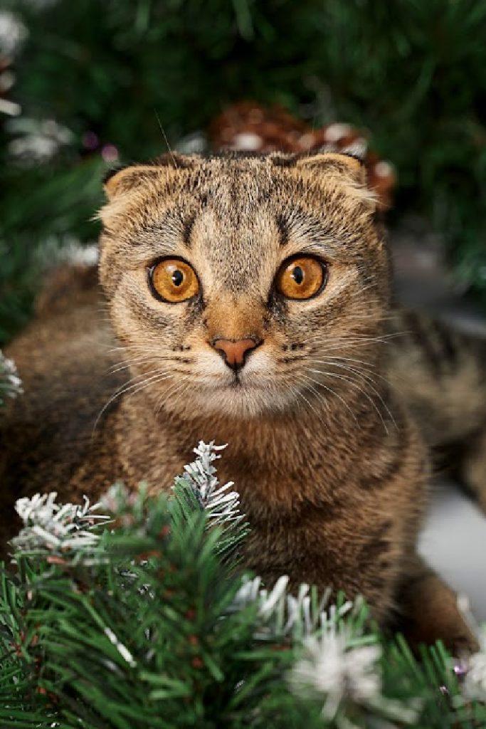 Funny Video cat in Christmas tree - Kids Activities Blog