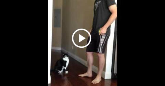 cat hugs human