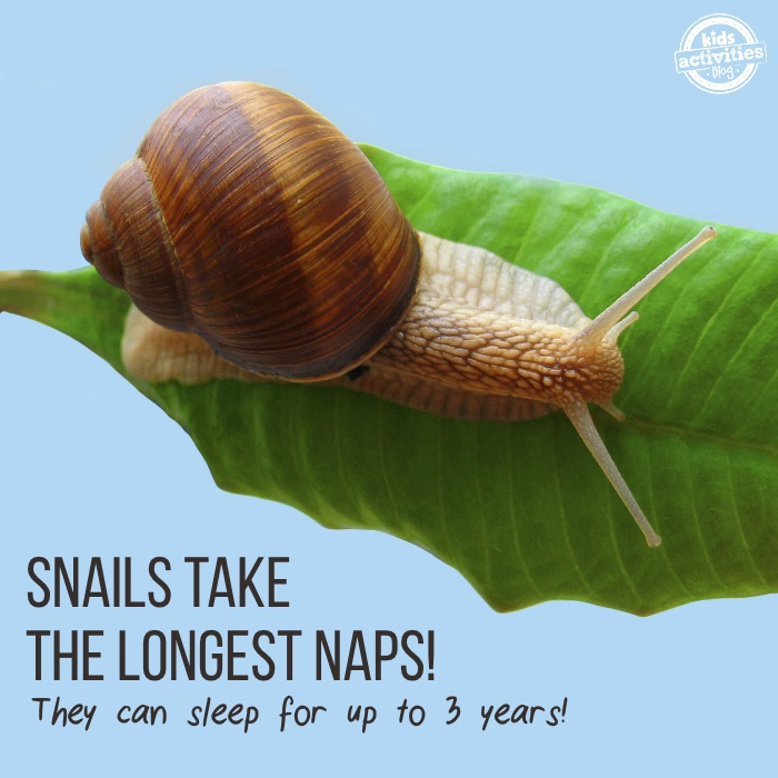 50 facts you didn't know - snails nap the longest!