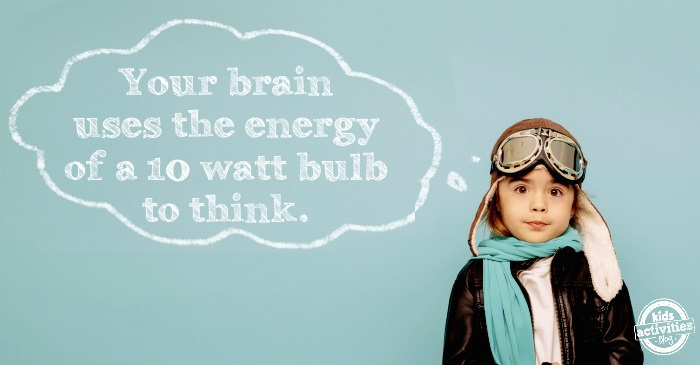 your brain uses energy & other silly science facts for kids