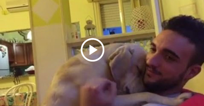 dog apology