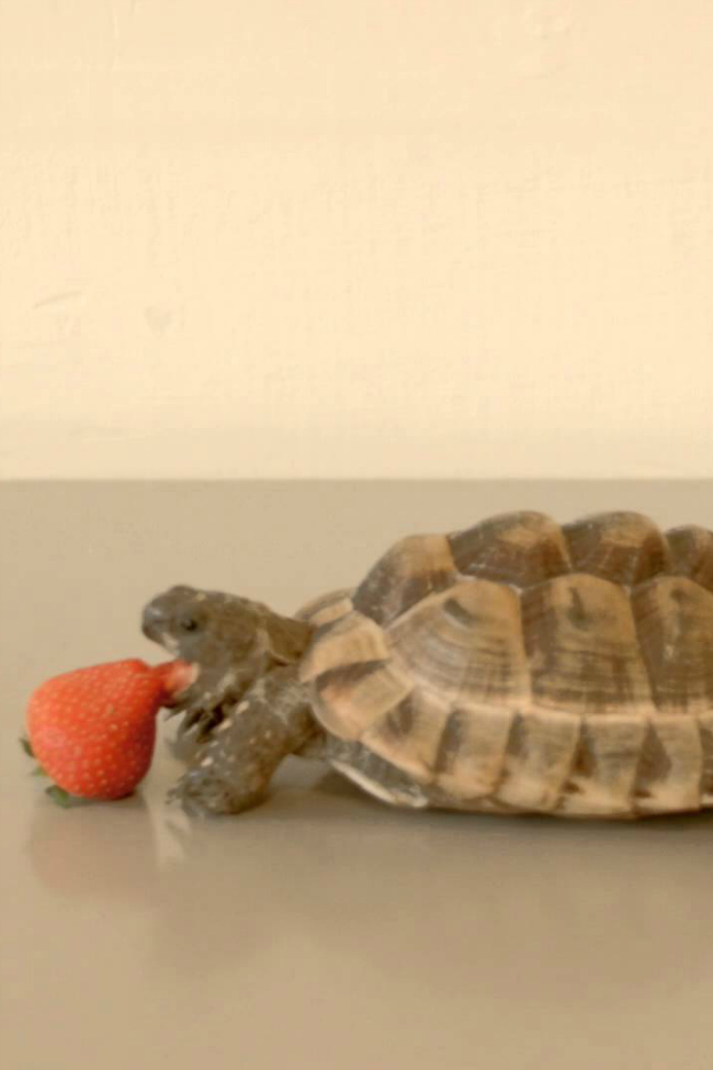 a tortoise to change the world