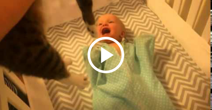 baby excited by cat