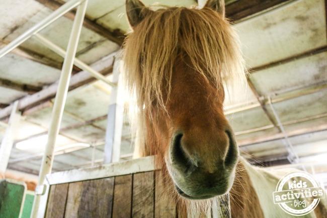KAB_horses1