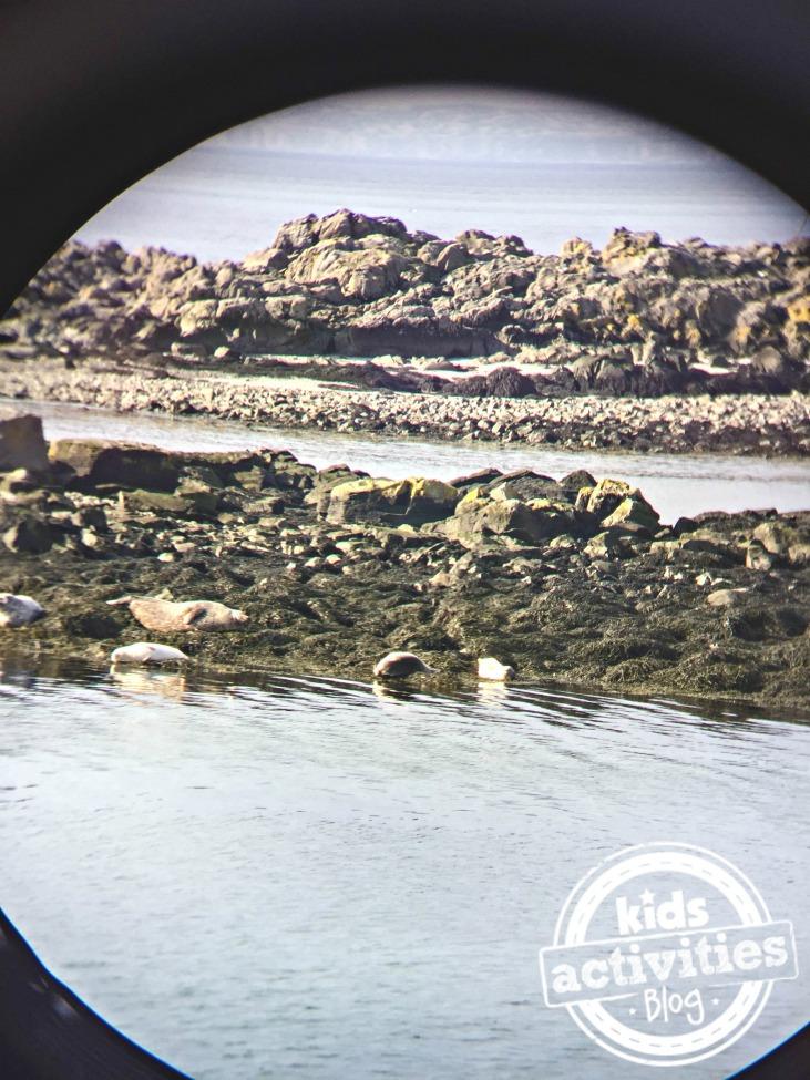 SPotting seals in North Iceland, through binoculars