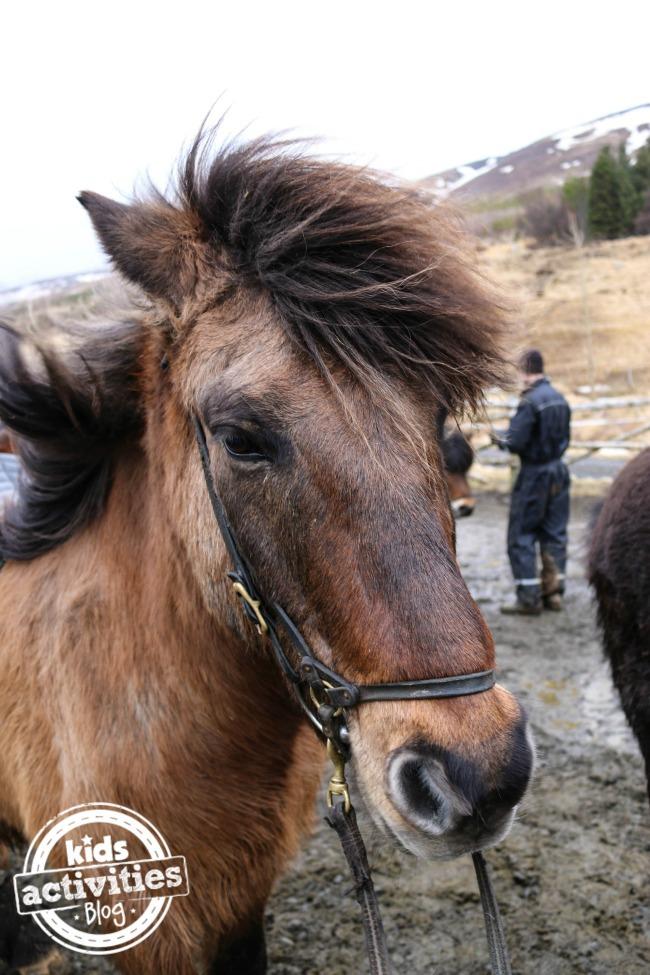 Icelandic horse riding #adventurestartswithme