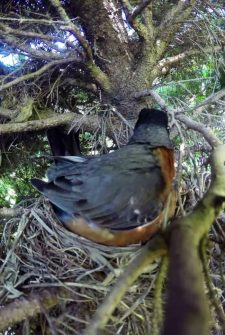 He set up a camera to watch birds hatch, but caught THIS instead!