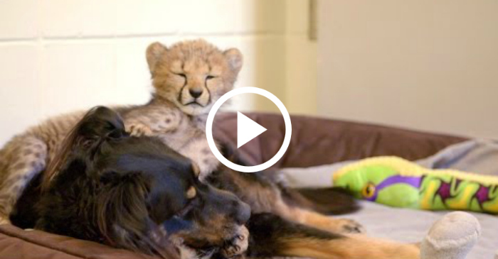 This Rescued Pup RAISES Baby Animals