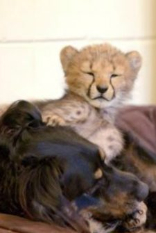 This Rescued Pup RAISES Baby Animals At The Cincinnati Zoo!!
