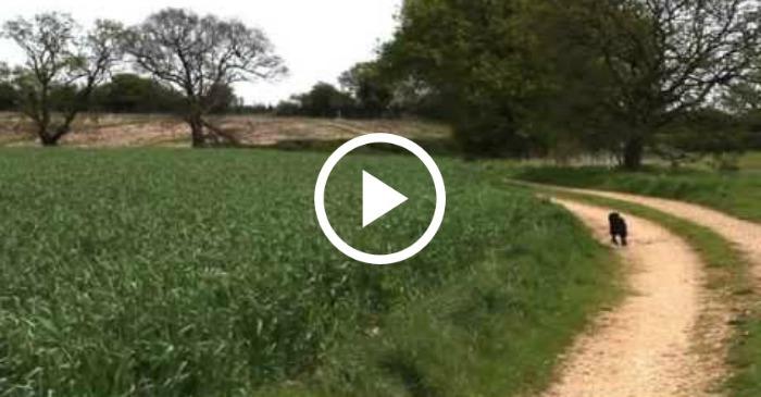 dog hopping in field