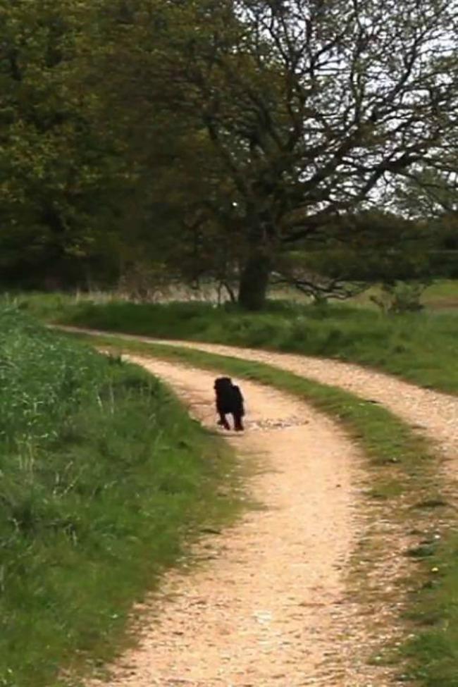 dog hops like a bunny