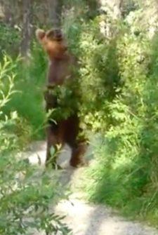 "Hikers Run Into Bear On Trail, ""Shoo"" Him Away"