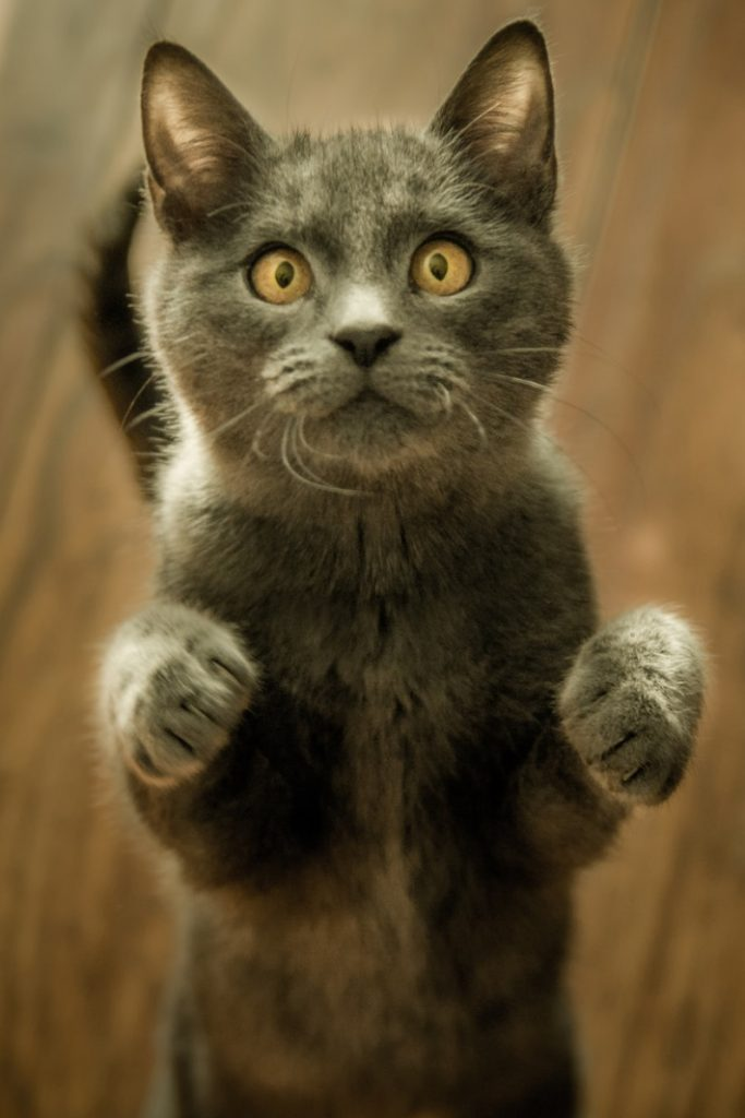 cat comforts crying child video - Kids Activities Blog