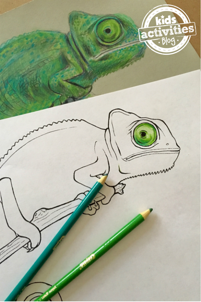 featured chameleons - Chameleon Coloring Pages Print