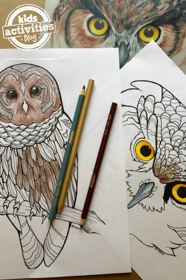 owl_featured