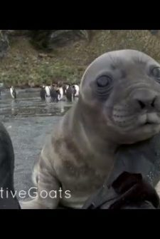 This Man Was Brutally Attacked By A Baby Seal!