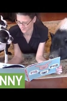 These Pets Gather Around Their Owner For Story Time
