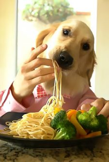 Nothing To See Here, Just Chef Dog Enjoying His Meal…