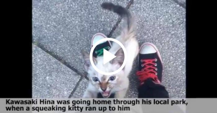 kitten makes friend