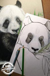 panda_featured