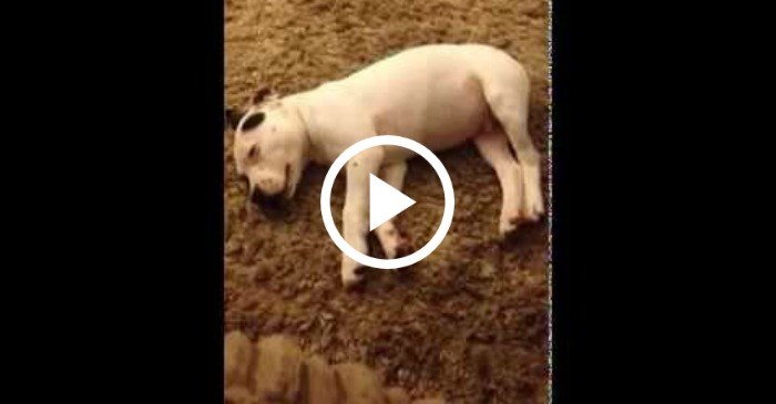 sleeping pup scared by own fart