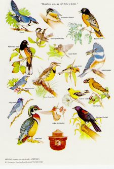 Bird Learning Link Collection