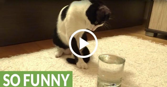 cat-meets-sparkling-water-hilarious
