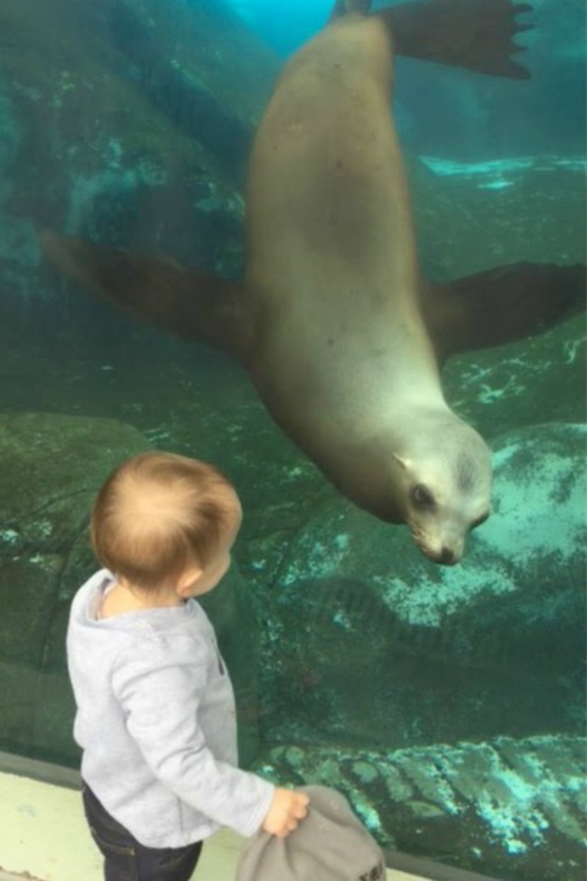child-and-seal