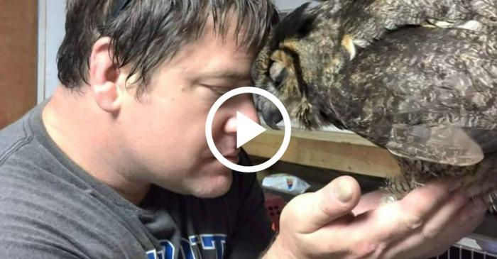 owl-love