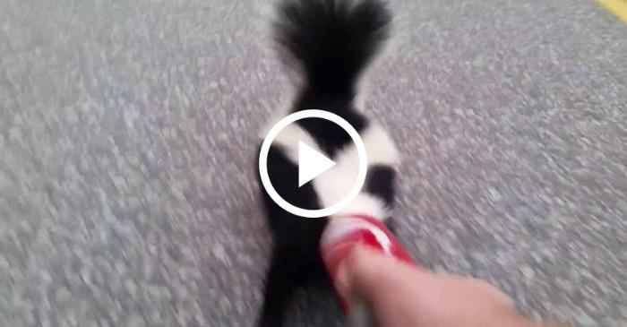 skunk-rescue
