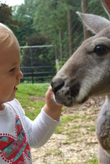 Adorable Baby And Kangaroo Are Best Friends