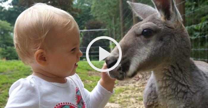 baby-and-kangaroo-besties