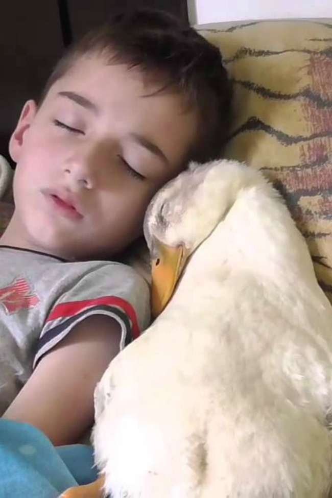 This Duck And Little Boy Sleeping Together Is The Sweetest