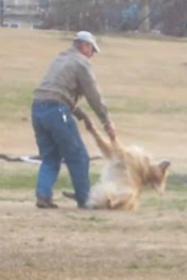 dog-plays-dead