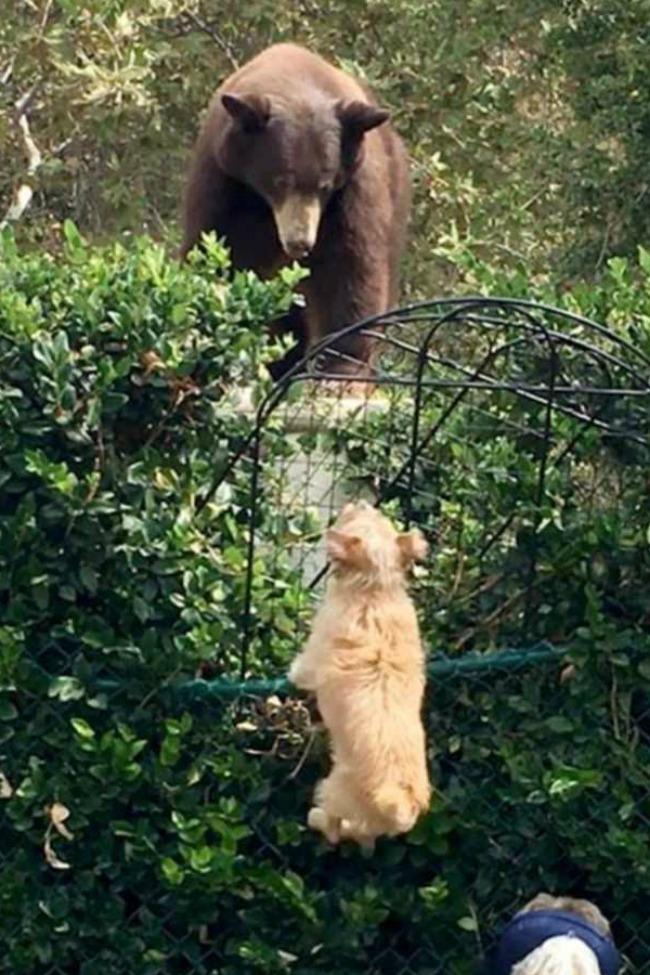 dog-scares-bear