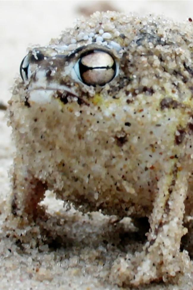 angry-frog