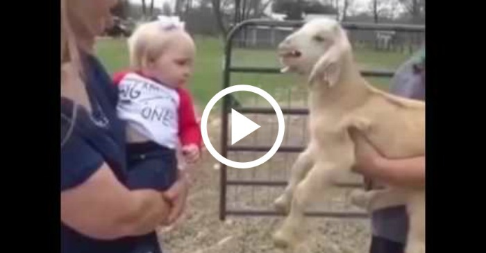 baby-and-goat-talk