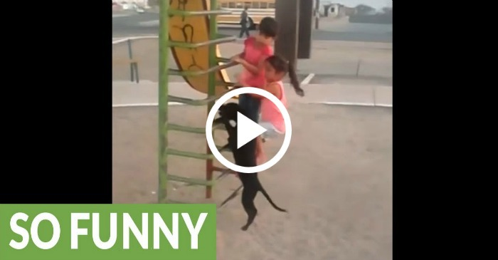 dog-climbs-ladder-to-go-down-slide