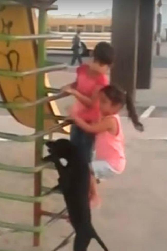 dog-climes-ladder