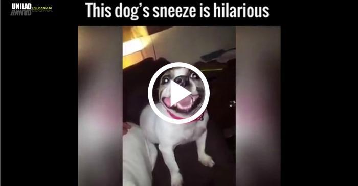 funny-dog-sneeze