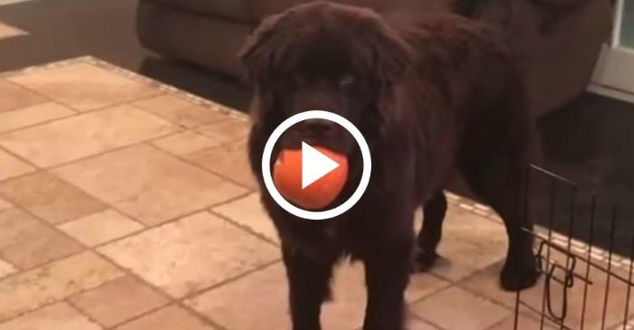 pumpkin-thief-puppy