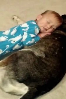 Dog Becomes An Instant Pillow To This Sleepy Baby
