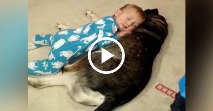baby-falls-asleep-on-dog